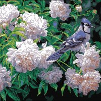Blue Jay & Blossoms-Plaid Paint by number kits