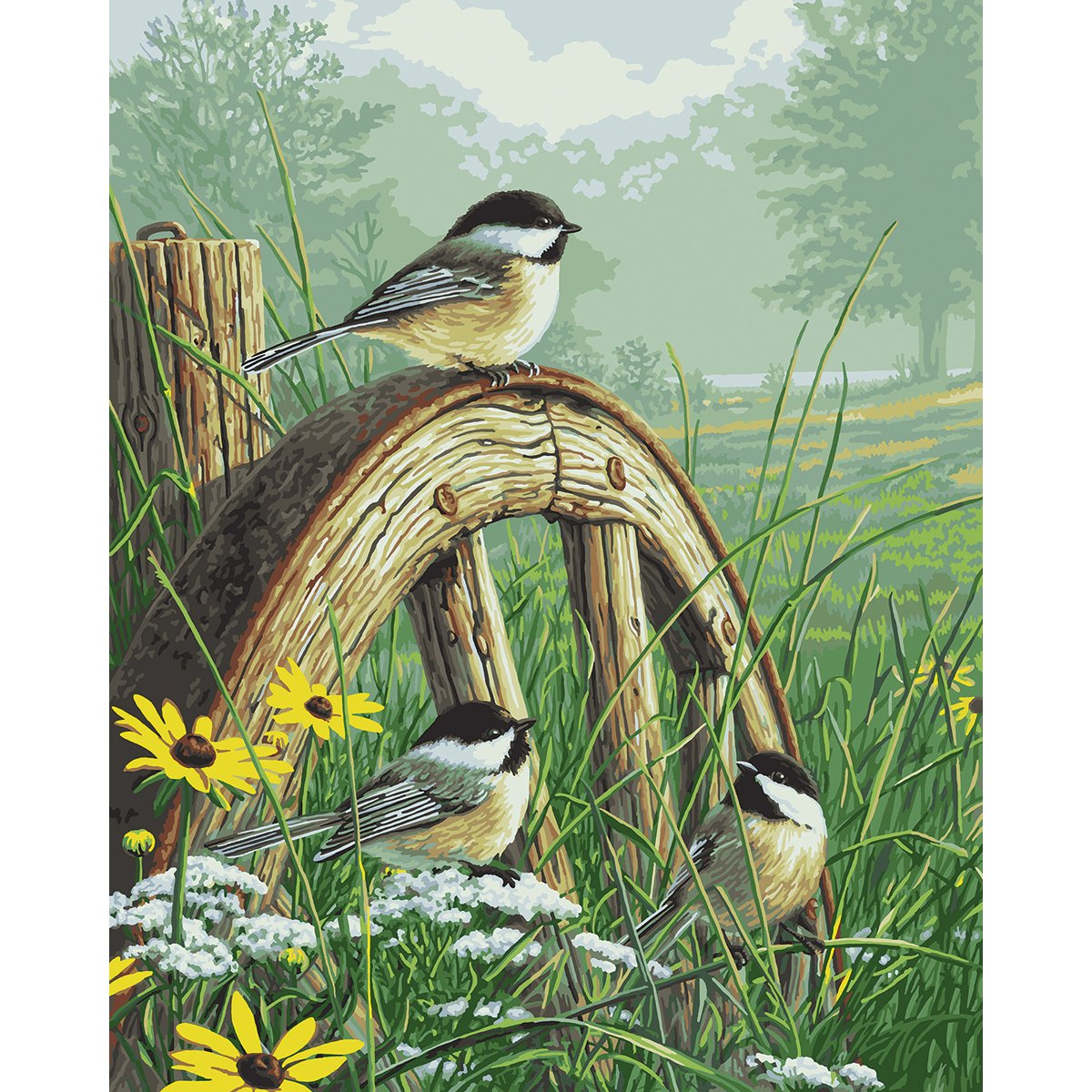 Bird Paint By Number Kits • Paint By Number For Adults