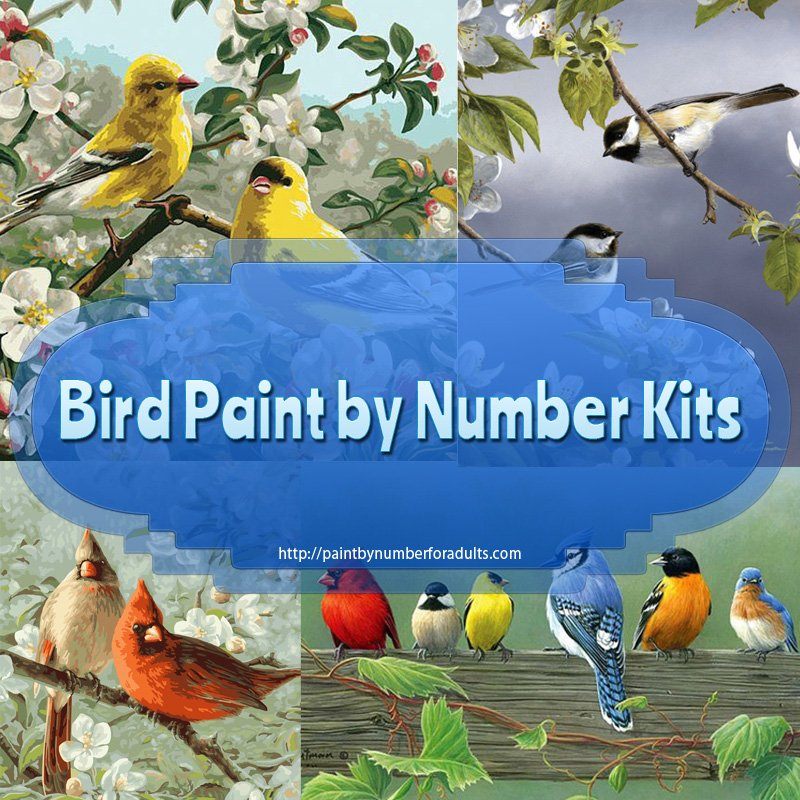 Bird Paint By Number Kits