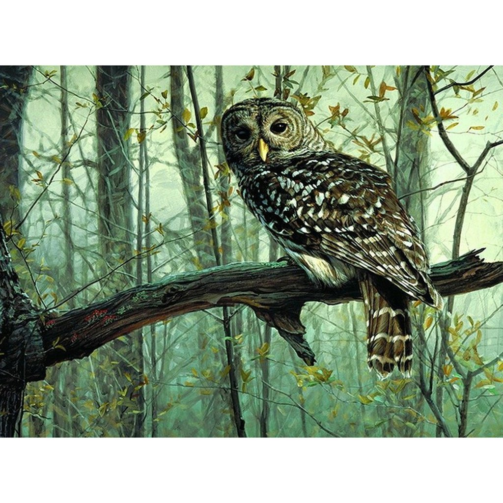Paint By Number Kits of Owls • Paint By Number For Adults